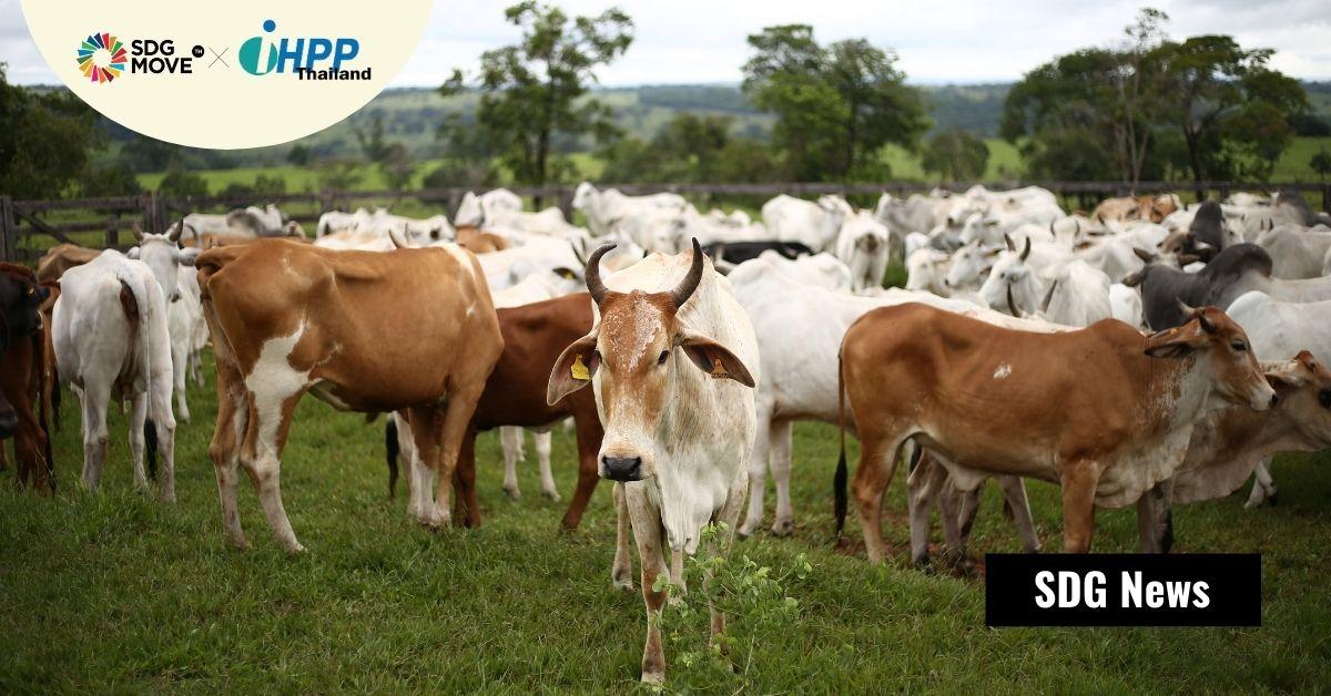 FAO ออกคู่มือ 'Climate-Smart Livestock' เป็นทางออกให้ภาคปศุสัตว์ในเอเชียแปซิฟิก เพิ่มผลิตภาพพร้อมกับลดการปล่อยก๊าซเรือนกระจก