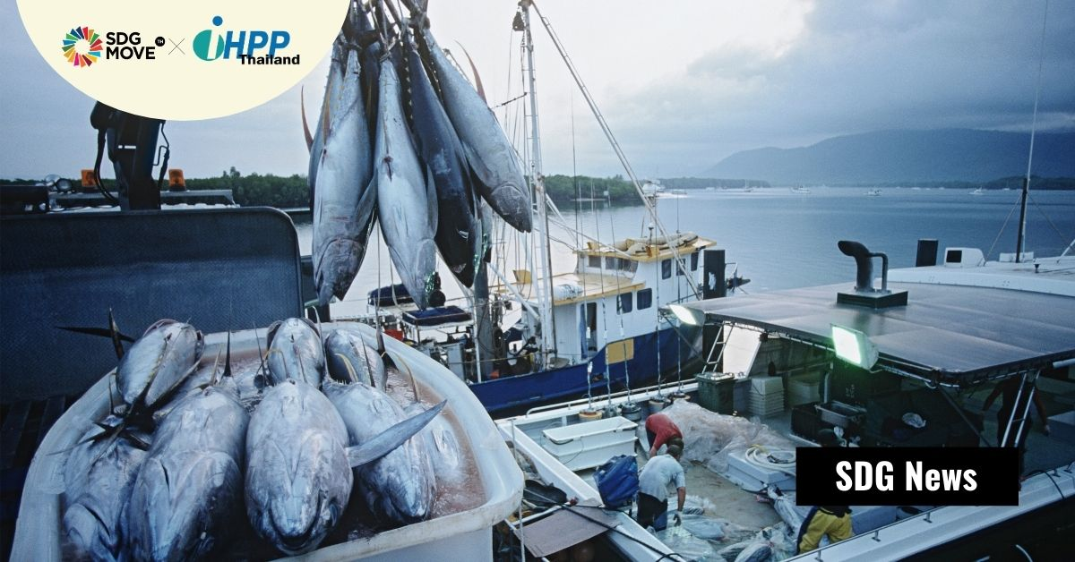 Global Tuna Alliance ย้ำความร่วมมือและวิสัยทัศน์ที่รับผิดชอบร่วมกันจะทำให้ทะเลไม่บอบช้ำและมีทูน่าพอสำหรับโลก