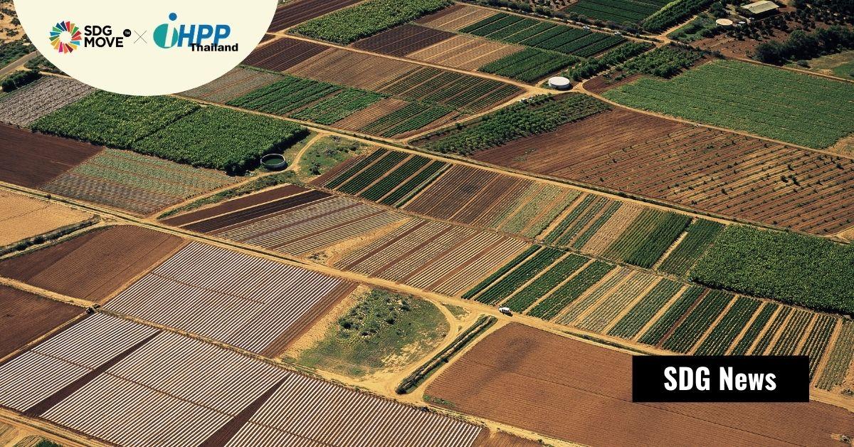 ให้เทคโนโลยีทางการเกษตรไข 'trade-offs' ประเด็นอาหารที่เพียงพอกับสิ่งแวดล้อมที่ยั่งยืน