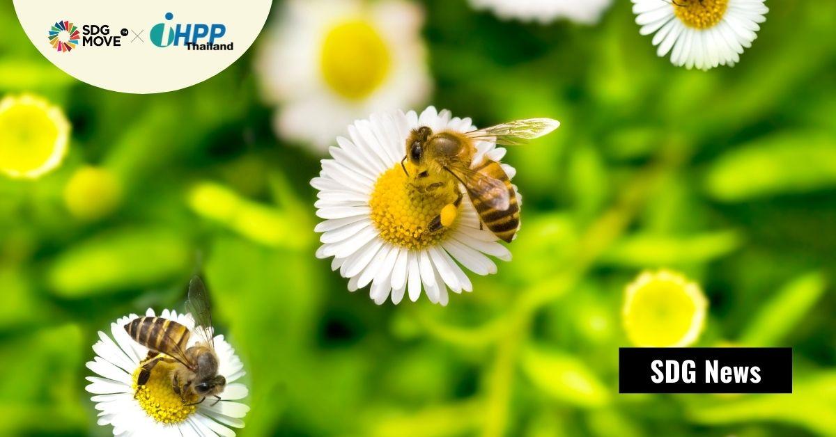 'Bed and Breakfast' หลังคาป้ายรถเมล์ และถนนทางหลวงสายน้ำผึ้ง: มาตรการช่วยพยุงประชากร 'ผึ้ง' ผู้นำการผลิตอาหารในเนเธอร์แลนด์