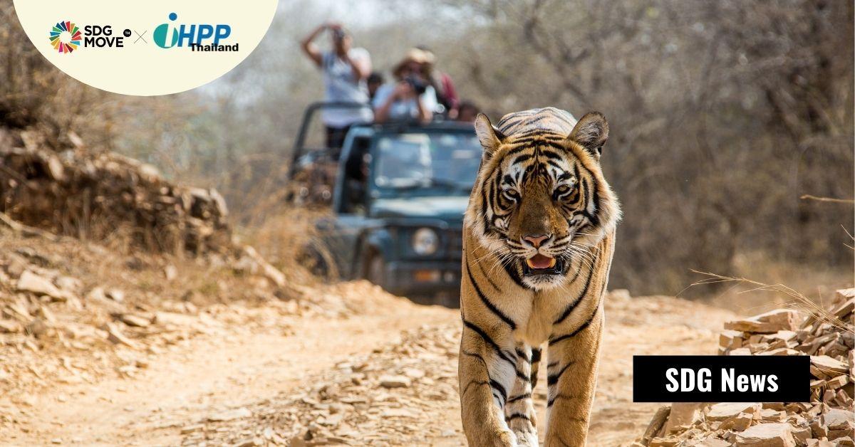 การติด GPS ไว้ที่คอเสือ อาจช่วยลดอุบัติเหตุรถชนเสือใกล้สูญพันธุ์บนท้องถนนในเนปาล