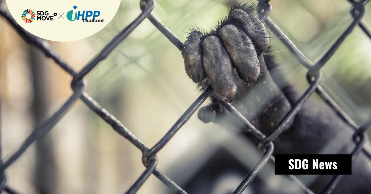 งานวิจัยเผย 'ความเหลื่อมล้ำด้านรายได้'  เป็นตัวผลักให้เกิดการค้าสัตว์ป่าผิดกฎหมายระหว่างประเทศ