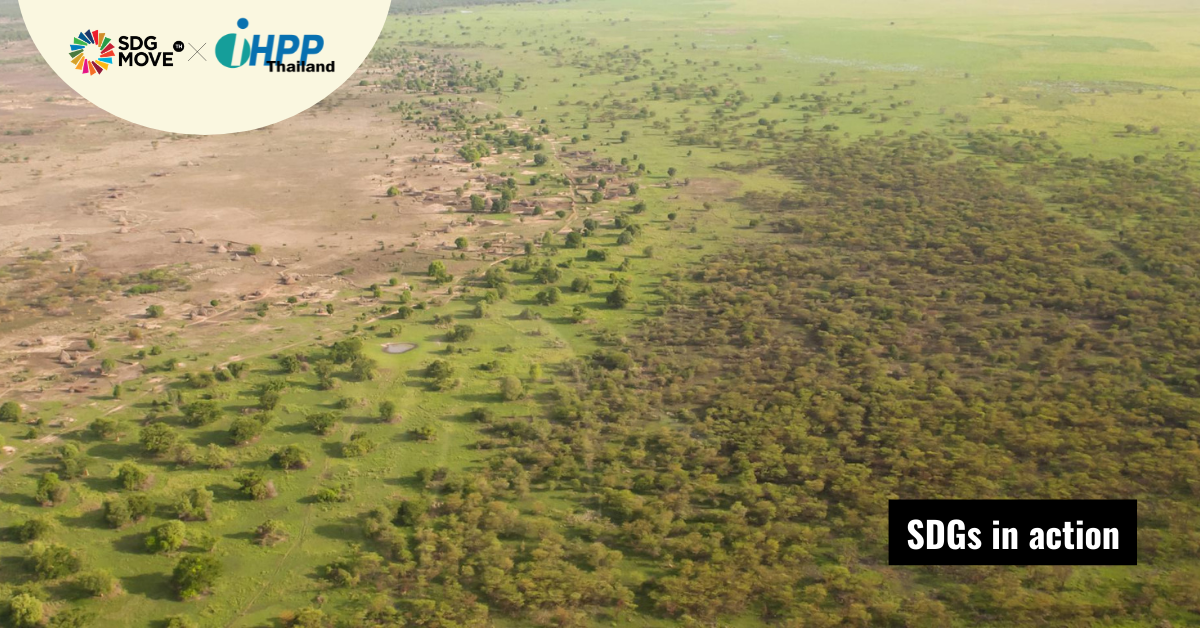 ความหวังของแอฟริกา 'กำแพงสีเขียว' ที่จะช่วยให้ผืนแผ่นดินกลับมาอุดมสมบูรณ์อีกครั้ง