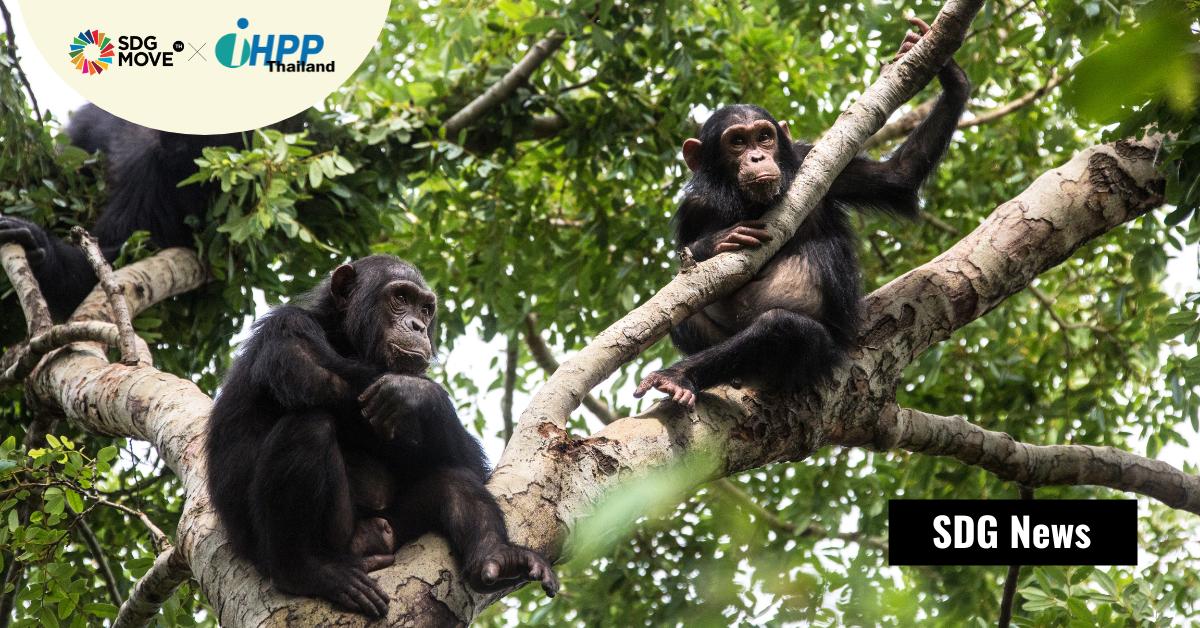 การล่าสัตว์ป่าคุ้มครองเพื่อการบริโภคเนื้อภายในประเทศ เพิ่มความเสี่ยงในการเกิดโรคติดต่อระหว่างสัตว์และคน