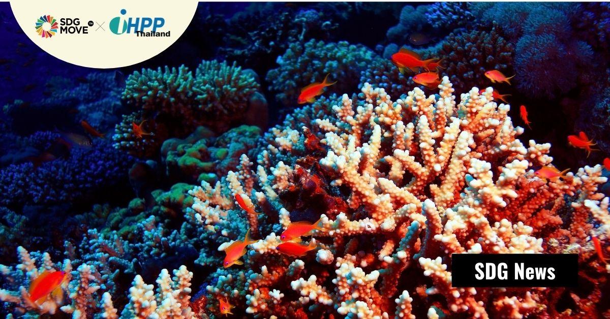 Allen Coral Atlas แพลตฟอร์ม-แผนที่ดาวเทียมแสดงสุขภาวะของแนวปะการังร่องตื้นที่รอบด้านที่สุดครั้งแรก